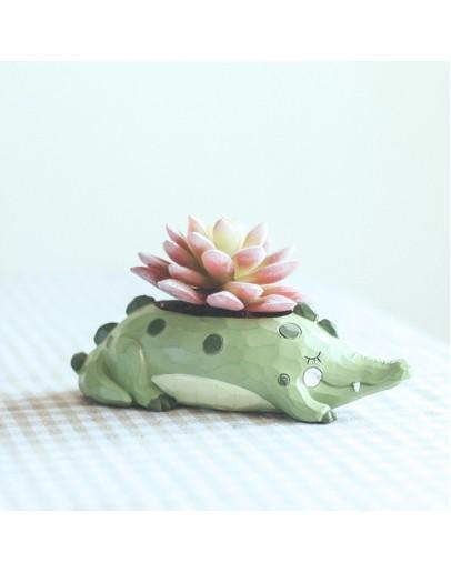 花園派對鱷咻咻花盆
